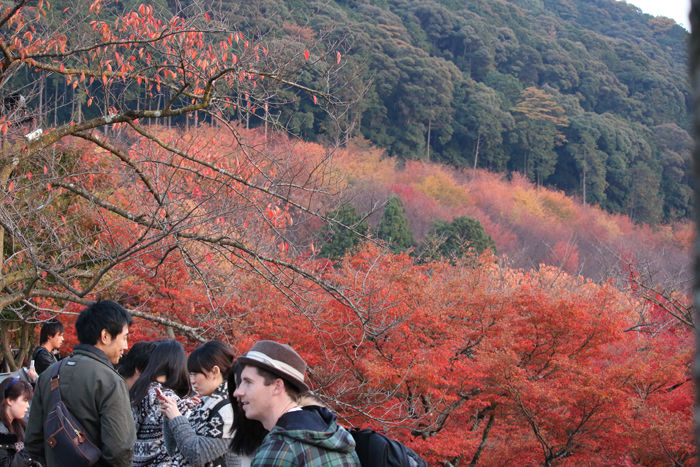 京都・東山区・清水寺20131124-1-5