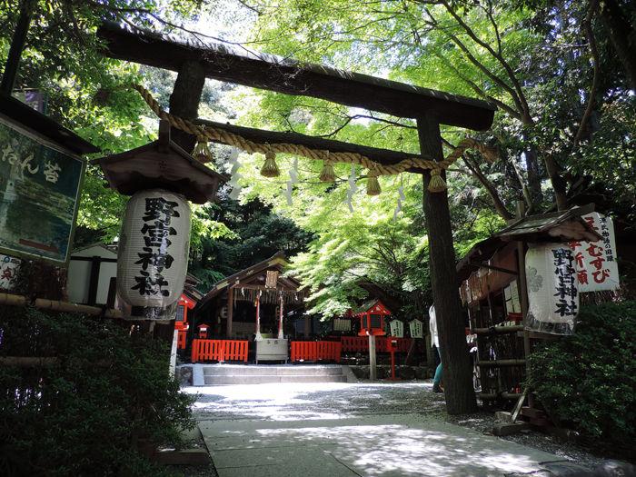 京都嵐山竹林の道3