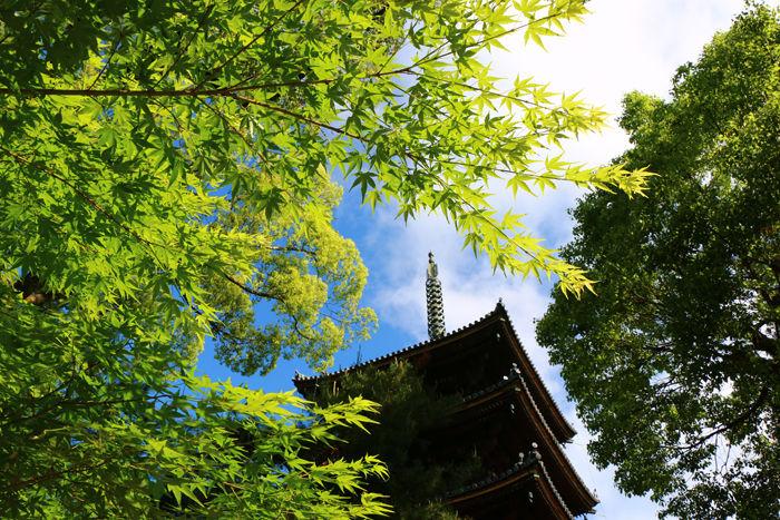 京都・右京区・仁和寺20160512-7