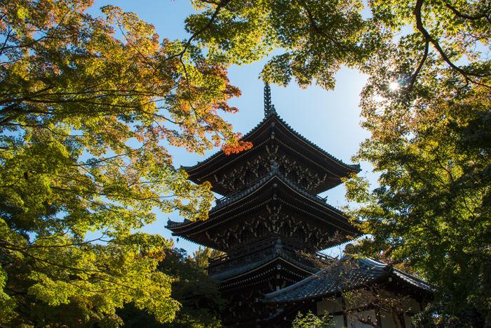 京都・左京区・真正極楽寺【真如堂】20161102-2