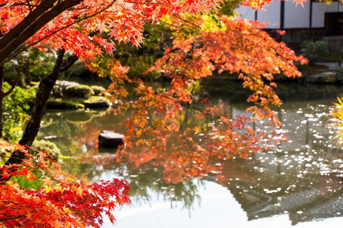 京都・北区・等持院20161116-9