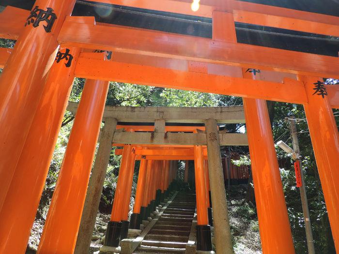 京都伏見稲荷大社13