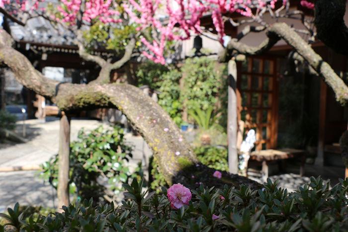京都・中京区・瑞泉寺20160317-4