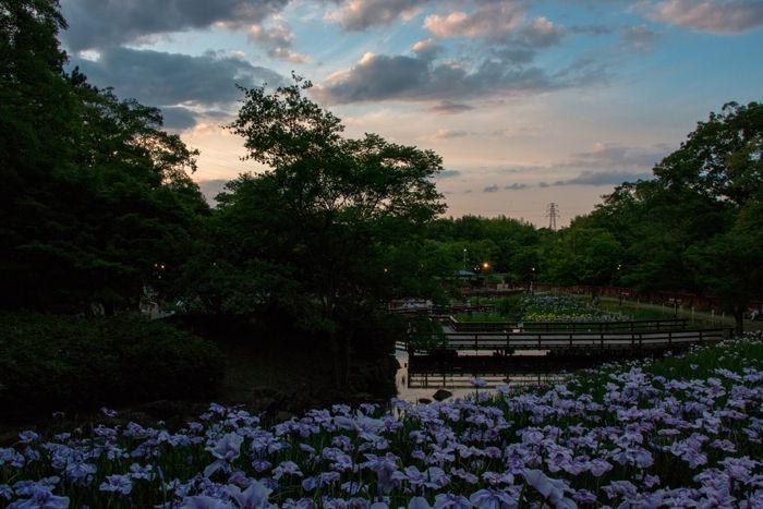 大阪・枚方市・山田池公園20170603-6
