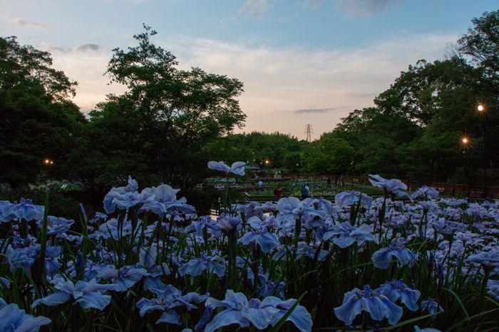 大阪・枚方市・山田池公園20170603-5
