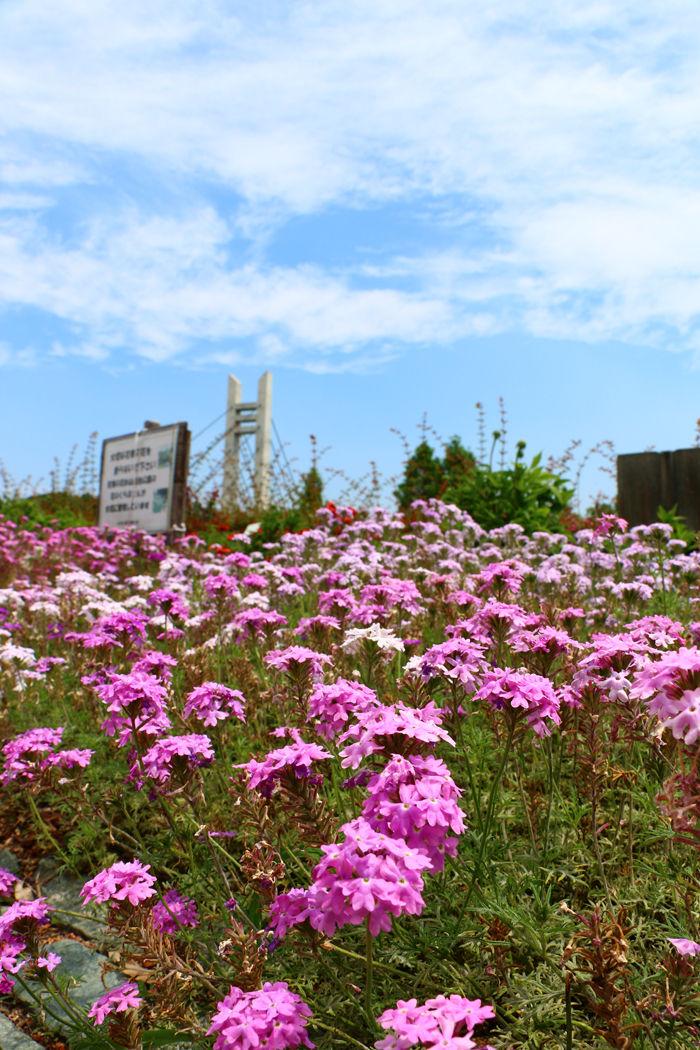 大阪・枚方市・山田池公園20160529-5