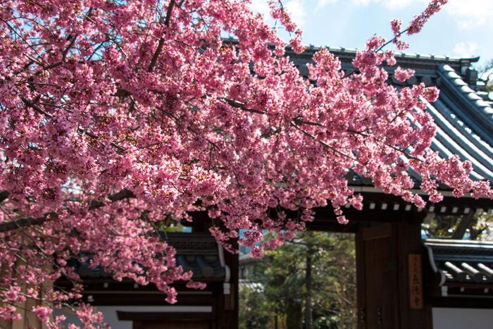 京都・左京区・長徳寺20170322-3