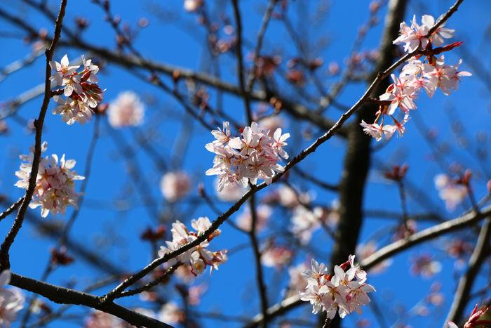 京都・東山区・三吉町地区20160321-2