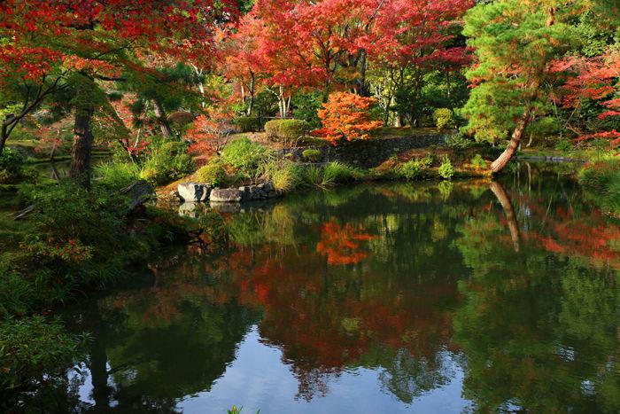 京都・北区・等持院20151121-14