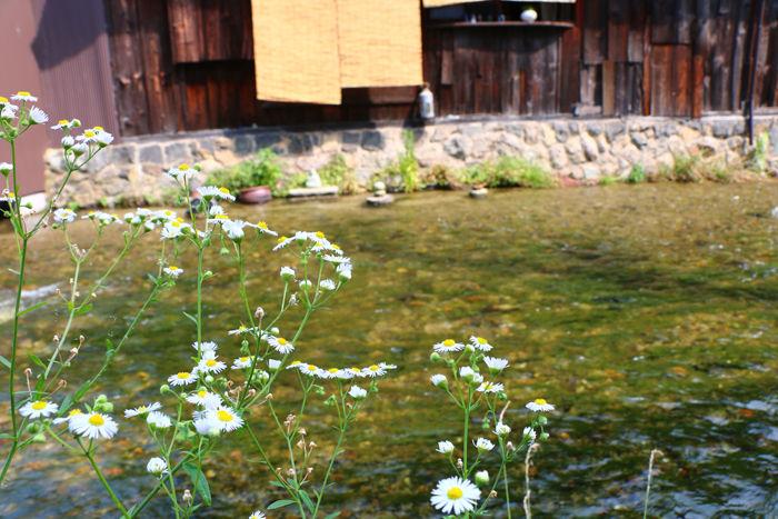 京都・東山区・石泉院町地区20150624-1