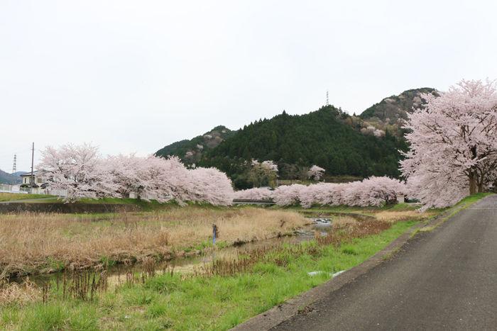 兵庫・朝来市・和田山町枚田岡地区20160406-6