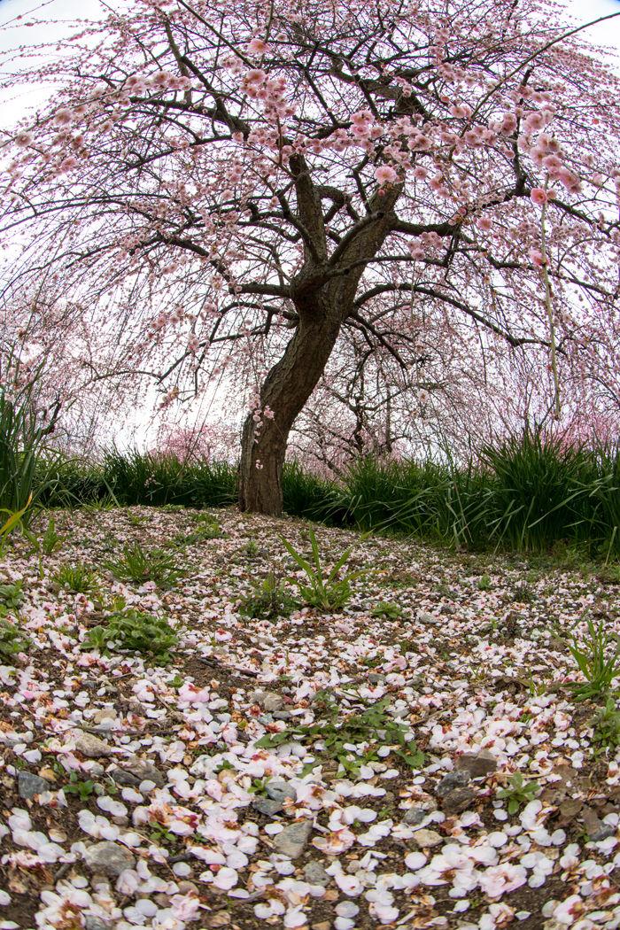 大阪・和泉市・【魚眼風景】和泉リサイクル環境公園20170303-8