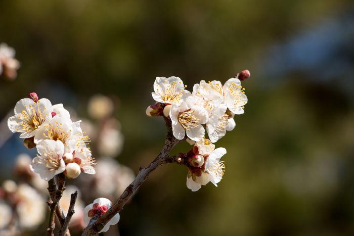 京都・上京区・京都御苑20170216-1
