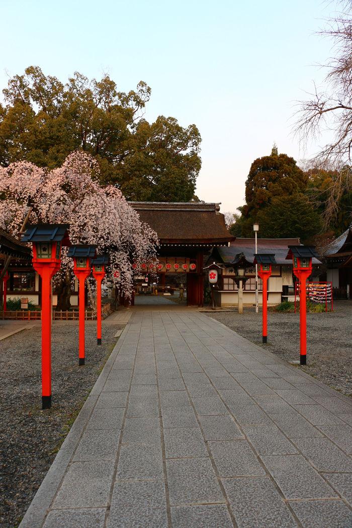 京都・北区・平野神社20160330-1