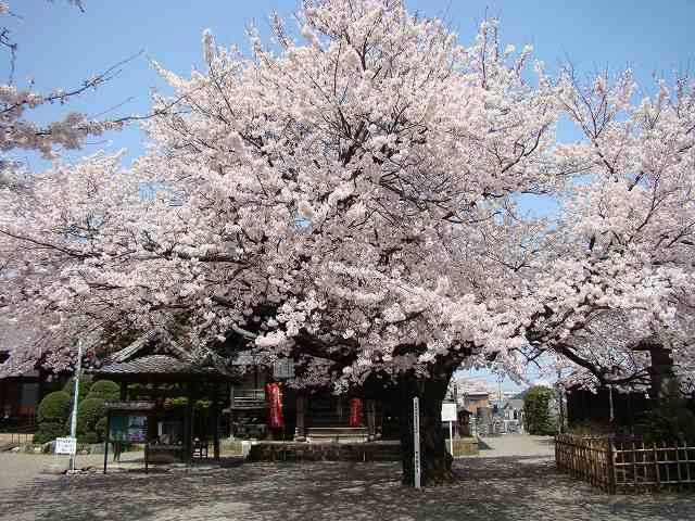 2009 春 011