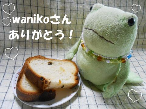 wanikoさんありがとう!201606