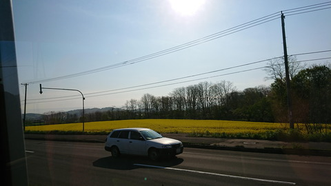 201805黄色いじゅうたん