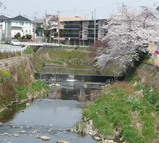senri-river2