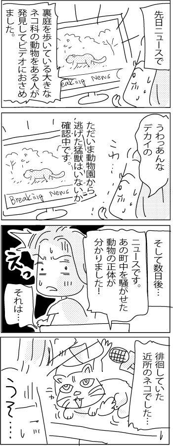 Cat-or-tiger-