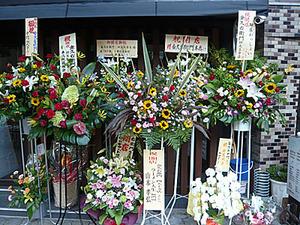 Osaka-King10flower