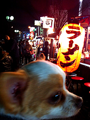 5屋台街@中洲・散歩・チワワ