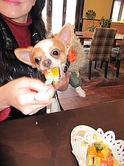 1店内:ペット同伴OKレストラン@baby's cafe(ベイビーズカフェ)・ドッグカフェ