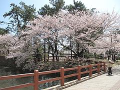 桜・花見・小倉城@リバーウォーク北九州・小倉