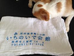 33タオル105円@いちのいで会館・観海寺温泉