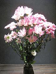 27菊の花@女子会