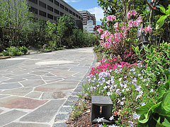 11外観:電気ビル緑地@スペインバル&カフェ・エスペランサ