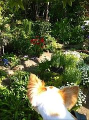 お庭とアンディ