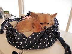 21店内:犬用ベッド@ドッグカフェレストラン・ワンパーク大濠店