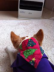 6暖かい@アンディとクリスマス