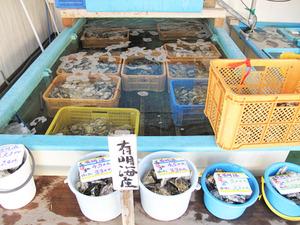 3牡蠣生簀@山田海産