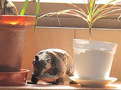 店内:木彫りの熊@札幌ラーメンえぞっ子若久店