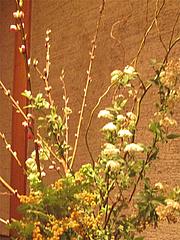 店内:床の間のお花@ひなまつり・女子会