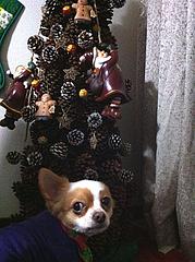 5ツリー@アンディとクリスマス