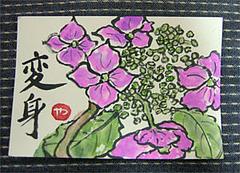 紫陽花(あじさい)の季節の絵はがき
