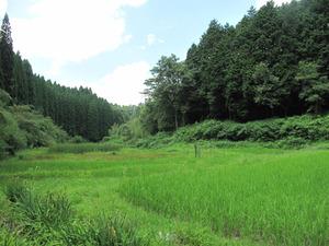 10幣立神宮(神社)