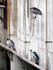 何かの鳥2@旦過市場・小倉