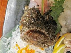 11虎魚(おこぜ)@海の路