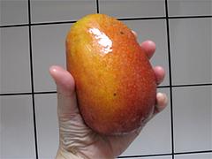 沖縄のマンゴー1
