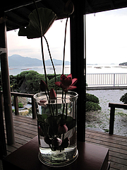 蓮祭り13@僧伽小野・糸島