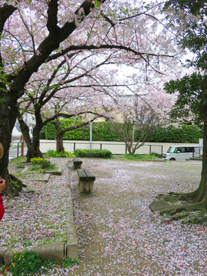 19桜@のらり食堂・アルク