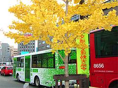 銀杏と西鉄バスのシティループバス「ぐりーん」