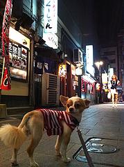 4錦小路@中洲・散歩・チワワ