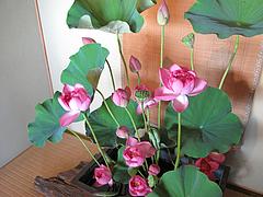 蓮祭り12@僧伽小野・糸島