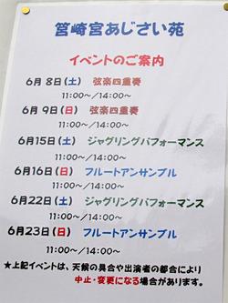 14ライブ・イベント@筥崎宮あじさい苑