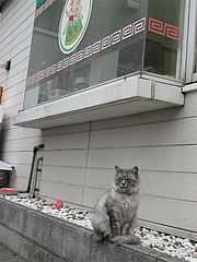 外観:猫@ラーメン魁龍(かいりゅう)博多本店