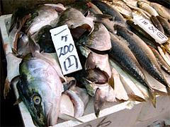 柳橋連合市場2